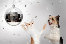 Dog And Cat New Years Celebrat...