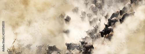 Fotobehang Afrika Dusty Wildebeest River Crossing Web Banner