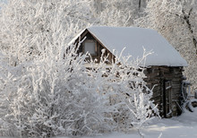 Old Wooden Shed During A Snowf...