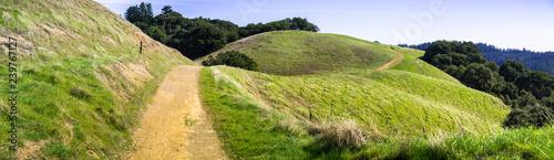 Obraz Hiking trail through verdant green hills in Santa Cruz mountains, San Francisco bay area, California - fototapety do salonu