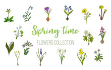 Spring Flowers Set Crocus, Muscari, Wood Sorrel