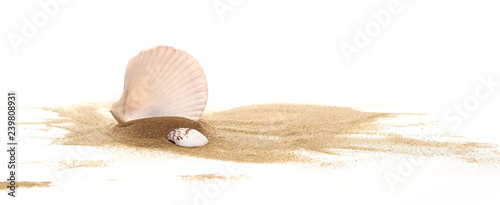 Fotografie, Tablou Seashell in sand pile isolated on white background