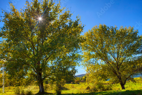 Wall Murals Pistachio summer morning with green trees and bright sun