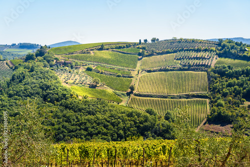 Foto  Vineyard in Passignano in Chianti region. Tuscany. Italy