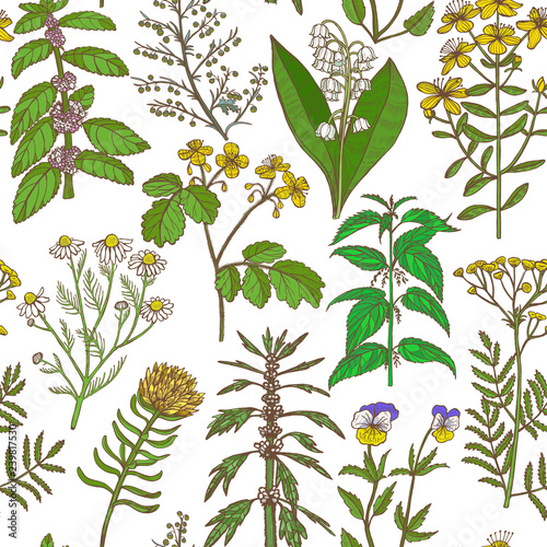 Colored Pattern with Medicinal Plants in Hand-Drawn Style Wall mural