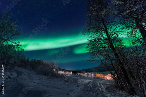 Poster Aurore polaire The polar arctic Northern lights aurora borealis sky star in Scandinavia Norway Tromso in the farm winter forest snow mountains