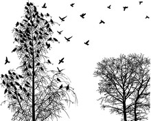 Lot Of Birds And Bare Trees Isolated On White