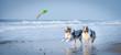 canvas print picture - Eine Gruppe von zwei Australian Shepherds springen voller Lebensfreude durch das blaue Wasser auf ein Spielzeug zu.