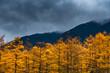 Kamikochi in Autumn, Japanese Alps, Chubu Sangaku National Park