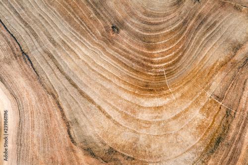 Wooden cut texture  Cross section of walnut tree trunk