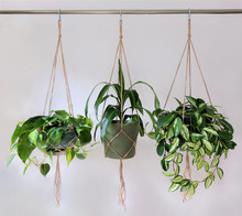 Three Jute Twine Macrame Plant Hangers Hanging From A Metal Pole. They Are Holding Pots With Plants In Them.