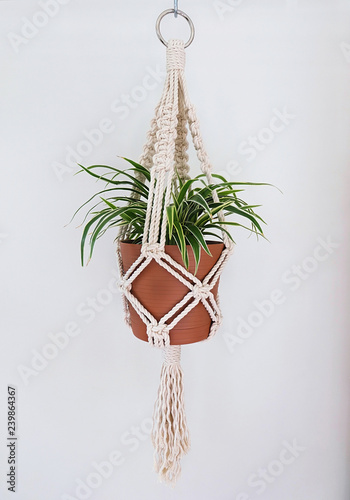 Foto op Canvas Vogels in kooien A hand-made macrame plant hanger made using 100% natural cotton. This cotton is 5mm thick. A metal ring is used for hanging. A spider plant is in the pot.