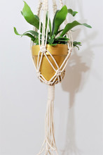 A Hand-made Cotton Macrame Plant Hanger With A Gold Acrylic Painted Ceramic Pot. The Plant In The Pot Is A Staghorn Fern (Platycerium).
