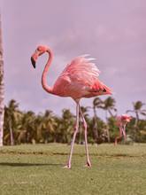 Beautiful Flamingo On Grass