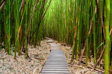 Panel Szklany Podświetlane Las Trail through the Bamboo Forest on Maui, Hawaii