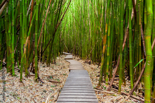 Poster Bamboe Trail through the Bamboo Forest on Maui, Hawaii