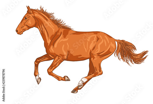 Valokuvatapetti Vector image of a horse running gallop isolated on white background