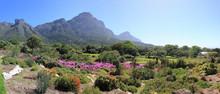 Kirstenbosch Botanic Garden, Cape Town, South Africa