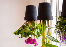 Potted Plants Upside-down