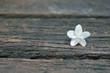 Water jasmine, Wrightia religiosa, on wooden background