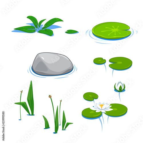 Obraz na plátně vector cute pond water lily, reed, cane, bulrush, elements nature summer