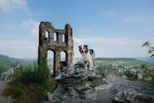 The Dog At The Ruins Of The Castle. Travelling With A Pet