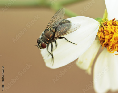Fly on flower petals.
