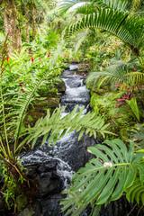 Fototapeta Współczesny Rainforest Hot Springs