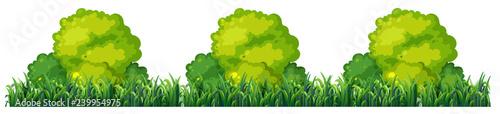 Isplated plant bush on white background Fototapete