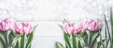 Fototapeta Tulipany - Pink tulips at white background with bokeh, front view,frame. Spring flowers. Tulips bunch, banner or template with copy space