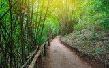 Fototapeta Bamboo - staircase on hill walkway in the forest staircase on ground with pathway in the bamboo forest