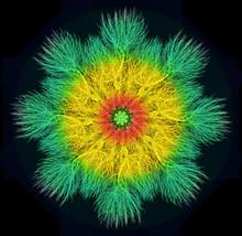 Mandala Astratto Costruito Con Rami Spogli.