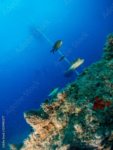 Wall Murals Diving seabed with underwater life