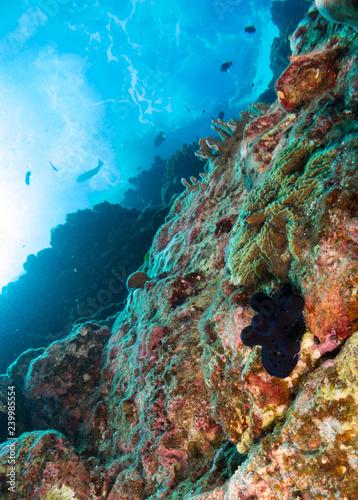 Staande foto Koraalriffen seabed with underwater life