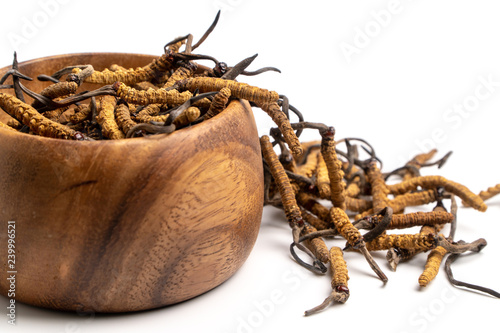 Close up Cordycep sinensis (CHONG CAO) or mushroom cordyceps on Wooden bowl on isolated background Canvas Print