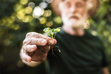 Sprout Of Vegetable In Aged Gardener Hand