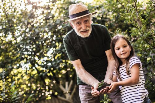 Fotografie, Obraz  Grandparent with grandchild working in summer garden