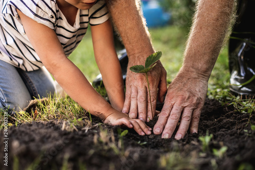 Fotografia  Hands of senior man with granddaughter gardening outside
