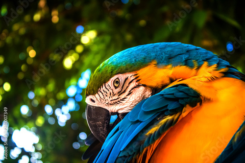 Ingelijste posters Papegaai colorful macaw parrot