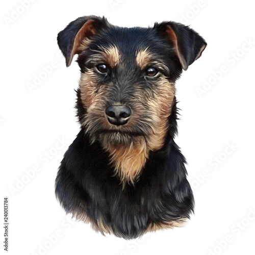 Foto  Portrait of a cute puppy isolated on white background