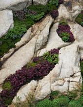 Vegetation Set Within Rocks
