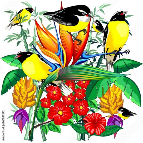 Tuinposter Draw Birds Cute Exotic Bananaquit on Tropical Nature