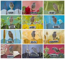 Months Photo Collage With A Bird Perched On 12 Different Decorated Fences On Spanish, Landscape Orientation