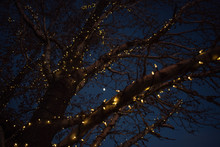 Bare Winter Tree Branches Wrapped With String Of White Lights Outdoor Holiday Decorations At Dusk With Bokeh Background