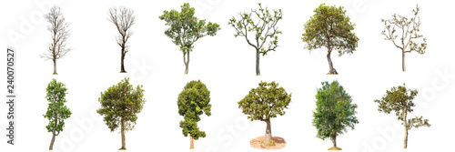 trees on white background , The collection of 12 trees. - 240070527
