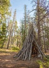 A Tipi, Or Teepee Made Of Trees In A Pine Forest