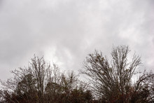 The Crown Of Bare And Leafless Branches Of Trees Set Against Ominous Gray Cloudy Sky In Winter.