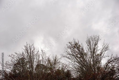 The crown of bare and leafless branches of trees set against ominous gray cloudy sky in winter Wallpaper Mural