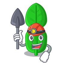 Miner Bergamot Leaf In A Chara...