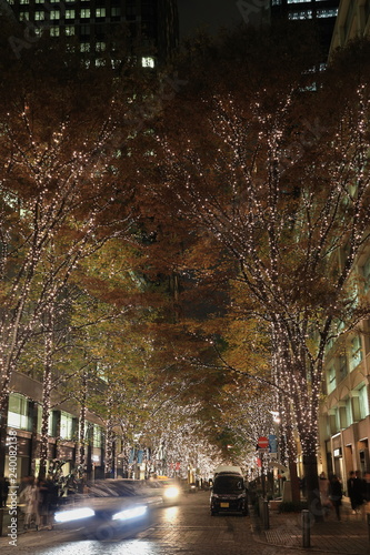 Poster Kyoto シャンパンゴールド色に輝く都会の並木道
